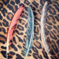 Three Painted Feathers by Drunkan