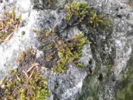 Rock and Moss by irkdevine