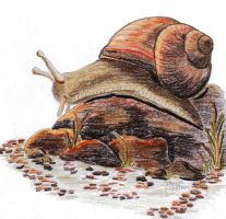 Another Wondering Snail by Elentarri