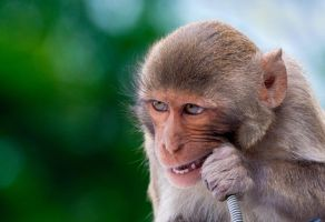 Monkey 14 by tpphotography