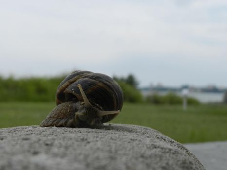 snail in nature by bogdanbabiuc