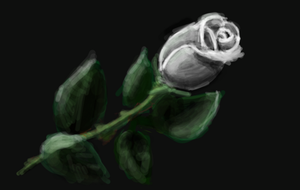 White rose by XerafCZ