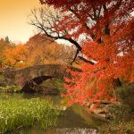 Autumn Pond II by YOSHIMETAL
