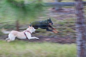 Dogs in motion by TomFawls
