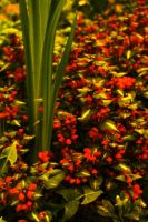 Flowers in Red and Green by kbhollo