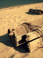 Wire hugs Driftwood by Beckaphotos