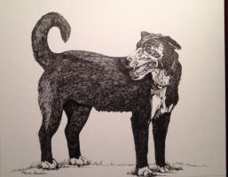 Commissioned Pet Portrait - Pen and Ink Drawing by mariangrose