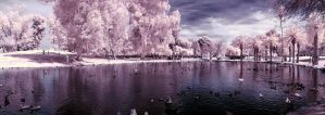 Reed Park Infrared Panorama by calanjackal