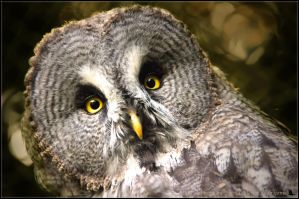 Owl by brijome