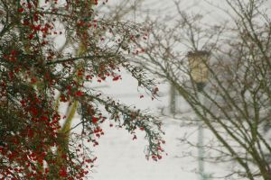 It's Snowing Today by Tinap