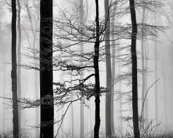 A Strip of Trees 06 by HorstSchmier