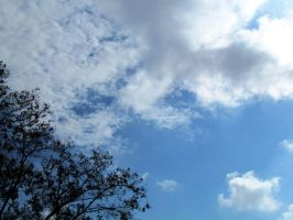 White colors, blue sky. by mayas15