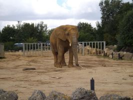 Colchester Zoo photos 16 by pan77155