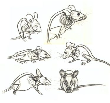 Studies of See Through Mice by nikkiburr