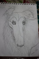 Borzoi sketch by Aynarra