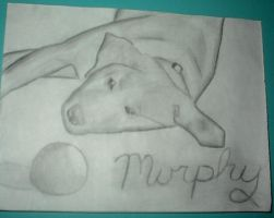 puppy by angelwith1morea15