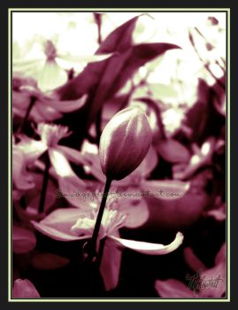 Budding Passion by Smudgeproof