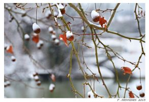 fruits of the winter by bracketting94