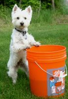 Westie On A Bucket by Aiml3ss