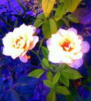 yellow roses by EmosexualAnna