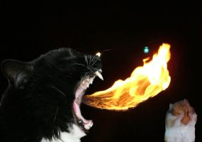 Fire breathing cat by Malici0us