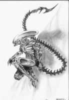 Alien by redjay