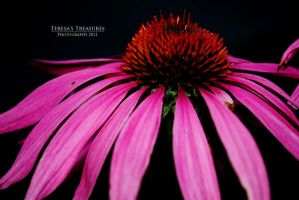 Beauty Within by teresastreasures72