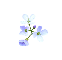 Flowers PNG by FrankAndCarySTOCK