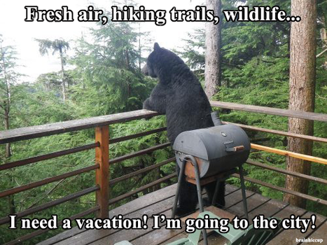 A Bear Vacation by brainhiccup