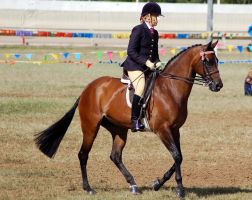 Show bay ridden canter by Chunga-Stock