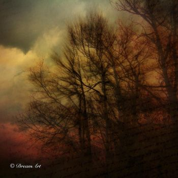 The Light That Falls Among The Trees... II by Dreamart