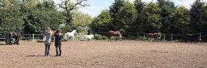 Showing Class 14.1hh and under by GirlehfromPB