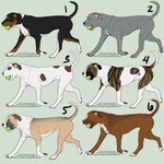Adoptables: American Pit Bull Terriers by sazzy-riza