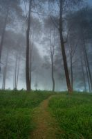 A Path Through the Mist by mfimages