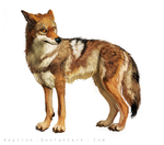 Yote by Keprion