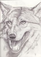 Happy Wolf by Carolyne