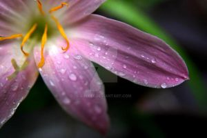 After Rain by Galeee
