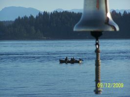 I'm fishing for Tyee by rubies52