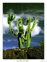 THE CACTUS by Photowoman