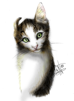 Cat drawing4 by Irkis