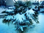 Winter Palm by MushFX