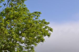 tree, sky and clouds by abbierose