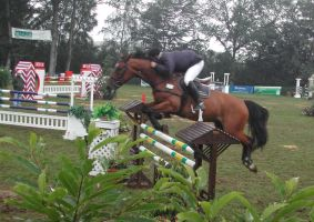 Competition horse 5 by Stock-gallery