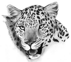 Leopard Face 2 by Joava