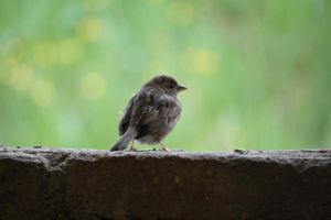 Bird Collection: Sparrow 3 by Germanstock
