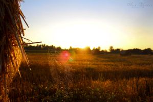 Sunrise through a spider web by neith13