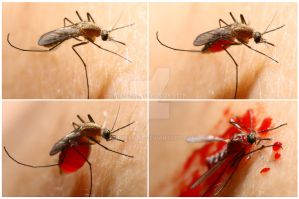 Mosquito attack by tatafanta