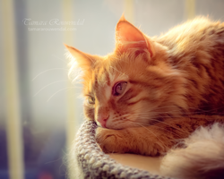 Daydreaming by TammyPhotography