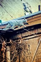cat on the roof by Anna1Anna