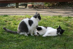 Cats 3 by tsb-stock
